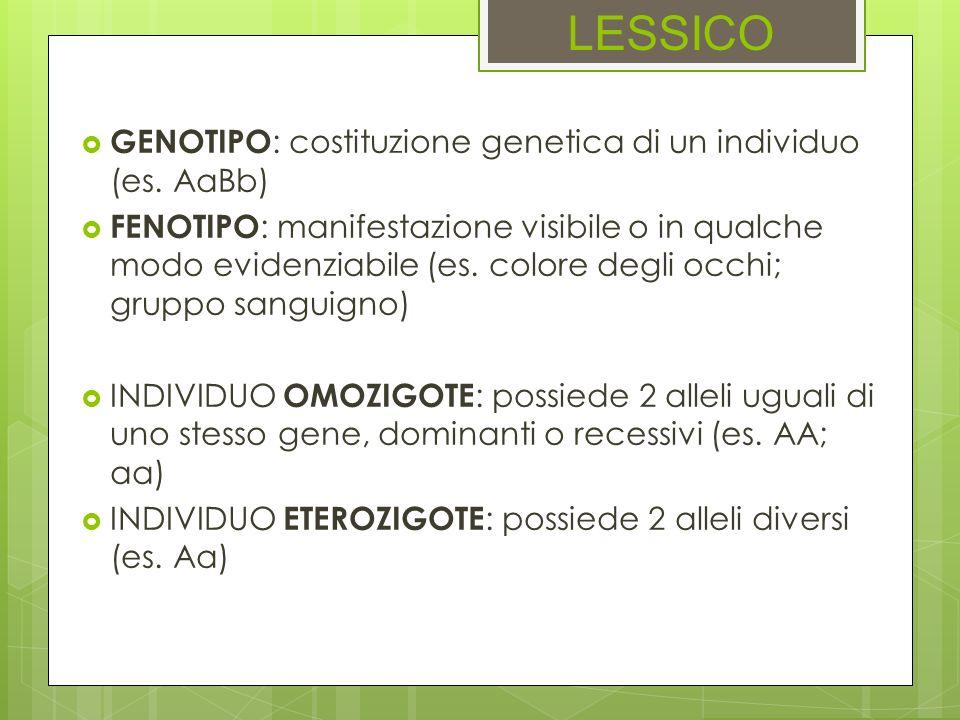 LESSICO GENOTIPO : costituzione genetica di un individuo (es. AaBb) FENOTIPO : manifestazione visibile o in qualche modo evidenziabile (es. colore deg