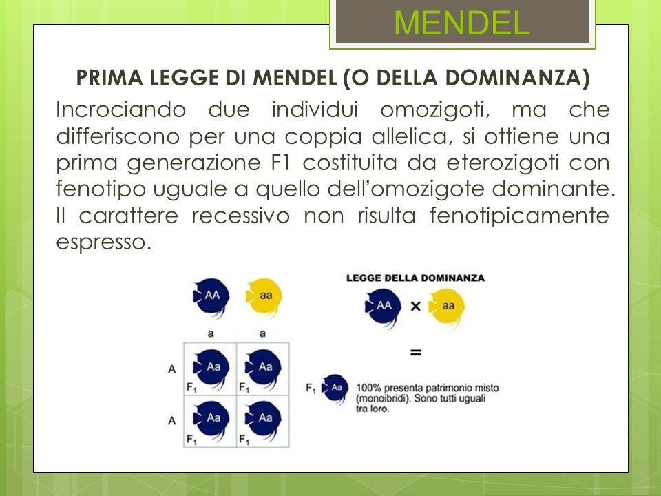 MENDEL PRIMA LEGGE DI MENDEL (O DELLA DOMINANZA) Incrociando due individui omozigoti, ma che differiscono per una coppia allelica, si ottiene una prim