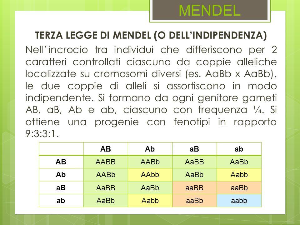 MENDEL TERZA LEGGE DI MENDEL (O DELLINDIPENDENZA) Nellincrocio tra individui che differiscono per 2 caratteri controllati ciascuno da coppie alleliche