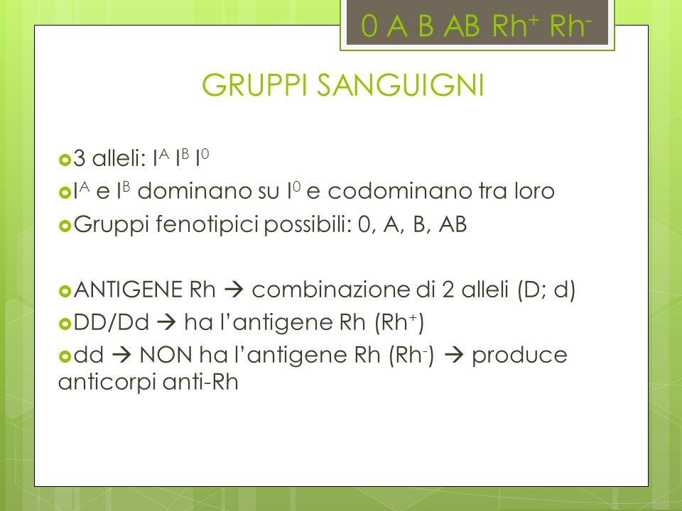 0 A B AB Rh + Rh - GRUPPI SANGUIGNI 3 alleli: I A I B I 0 I A e I B dominano su I 0 e codominano tra loro Gruppi fenotipici possibili: 0, A, B, AB ANT