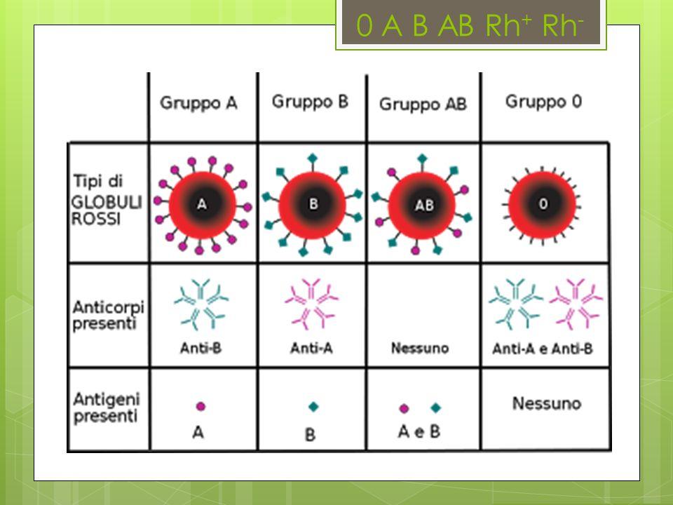0 A B AB Rh + Rh -