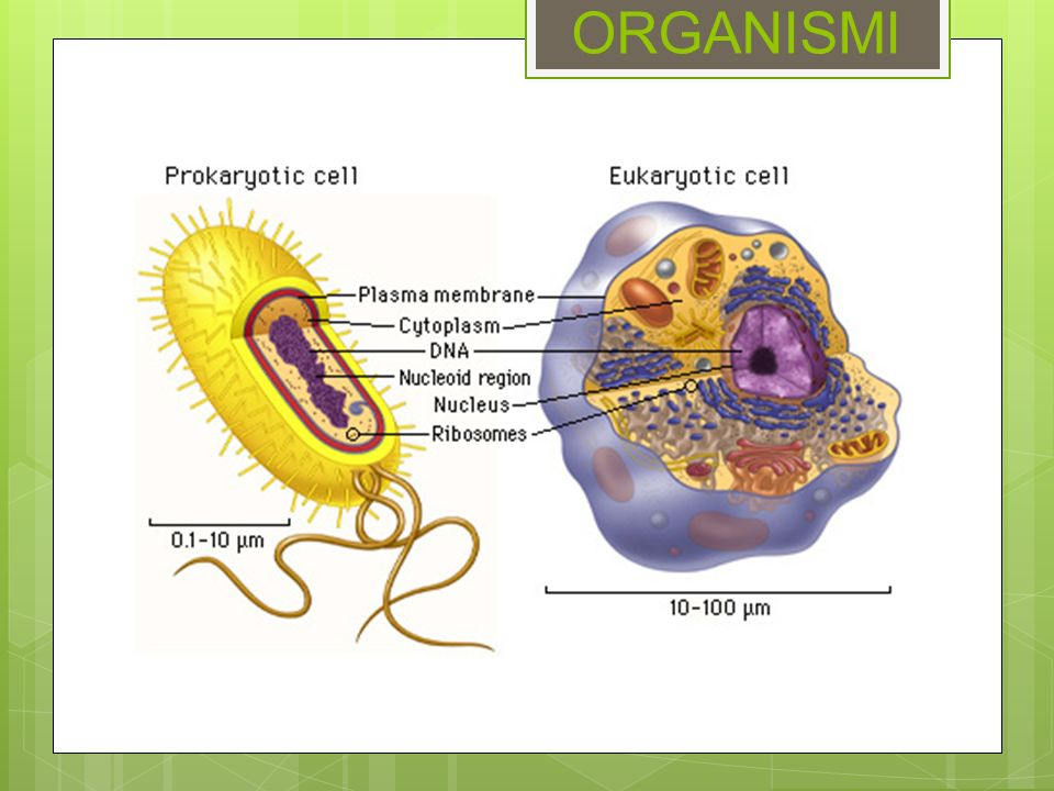 ORGANISMI