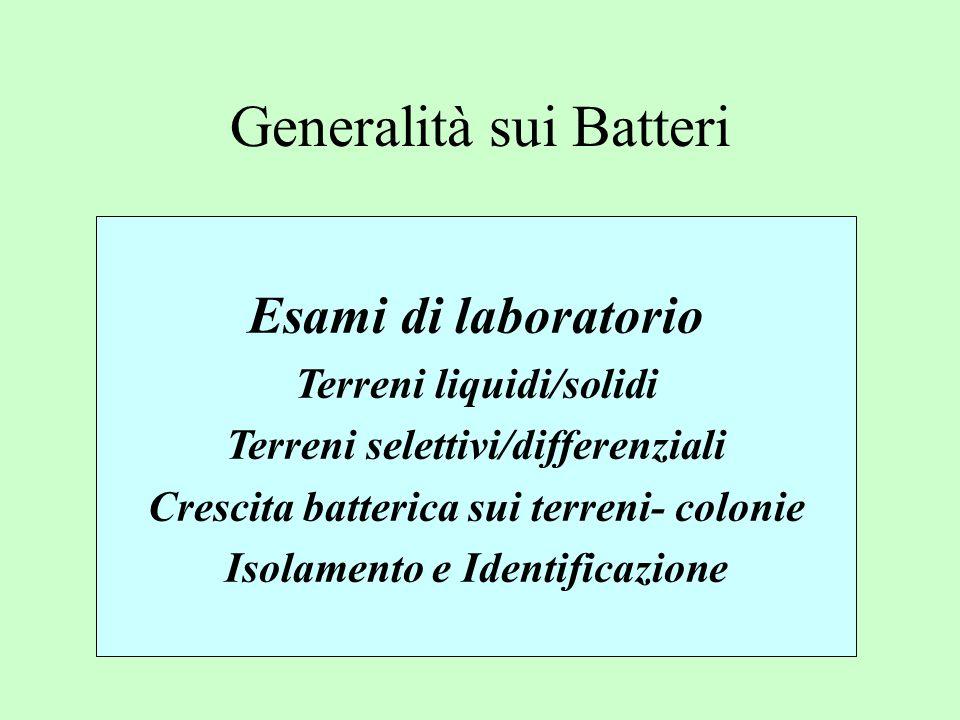 Ag.Somatici O Ag.