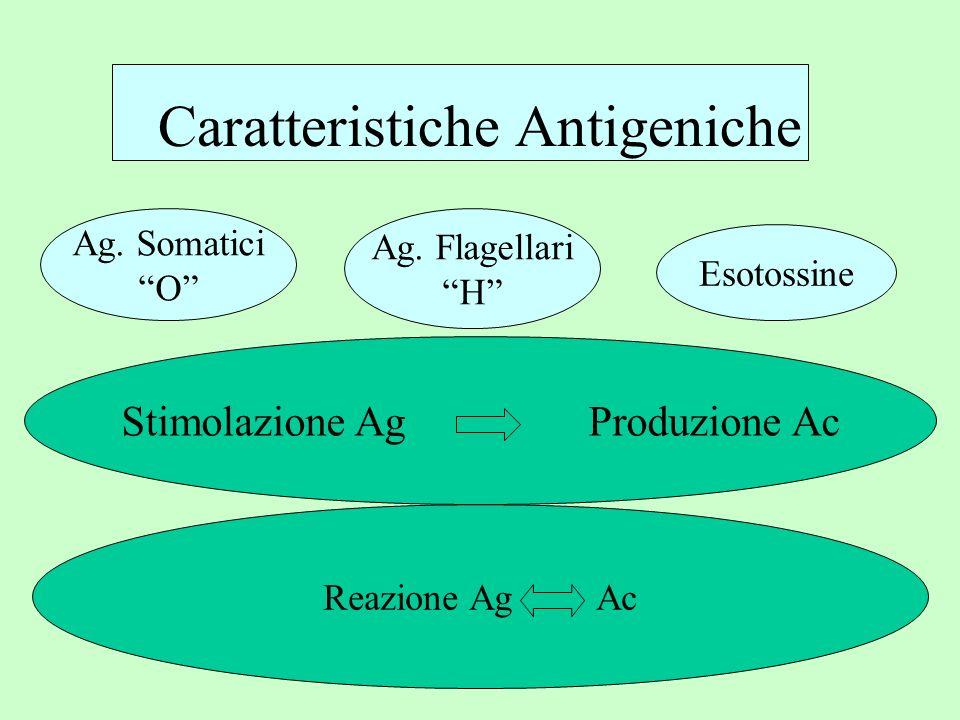 Ag. Somatici O Ag. Flagellari H Esotossine Caratteristiche Antigeniche Stimolazione Ag Produzione Ac Reazione Ag Ac