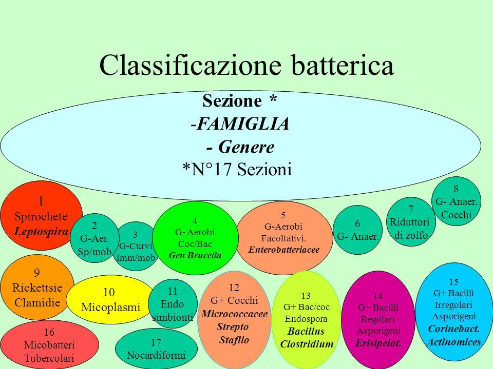 Classificazione batterica Sezione * -FAMIGLIA - Genere *N°17 Sezioni 3 G-Curvi Imm/mob 1 Spirochete Leptospira 9 Rickettsie Clamidie 8 G- Anaer. Cocch