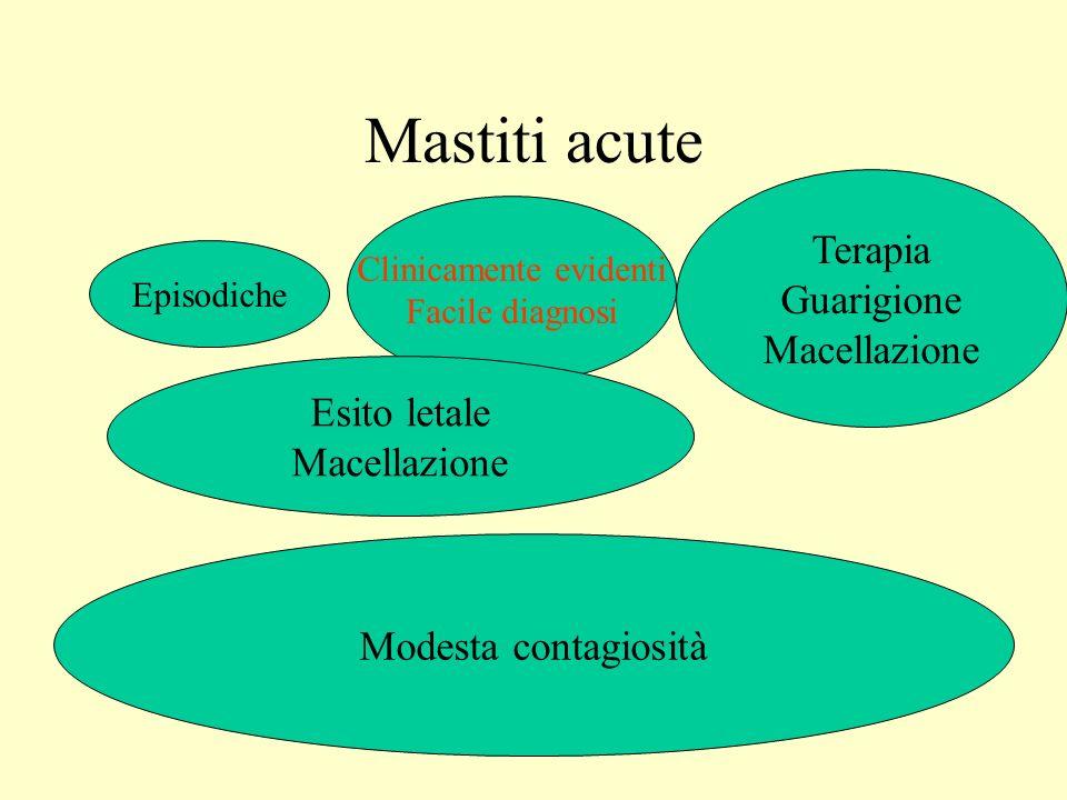 Mastiti acute Episodiche Clinicamente evidenti Facile diagnosi Esito letale Macellazione Terapia Guarigione Macellazione Modesta contagiosità