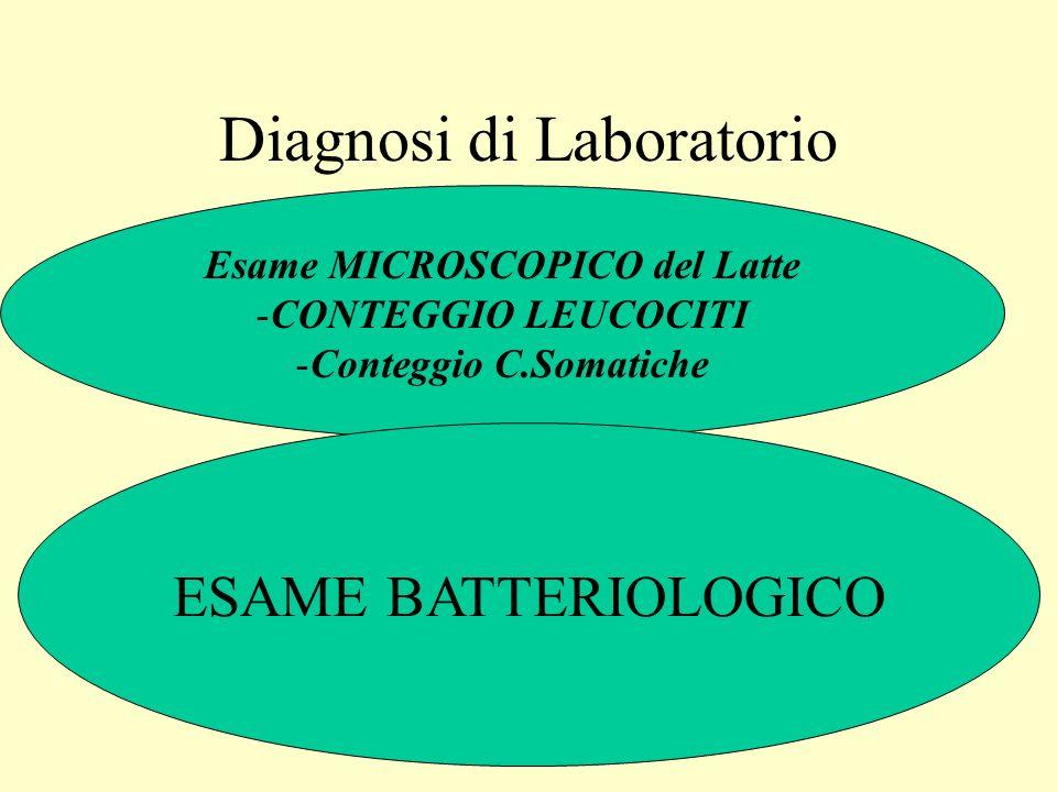 Diagnosi di Laboratorio Esame MICROSCOPICO del Latte -CONTEGGIO LEUCOCITI -Conteggio C.Somatiche ESAME BATTERIOLOGICO