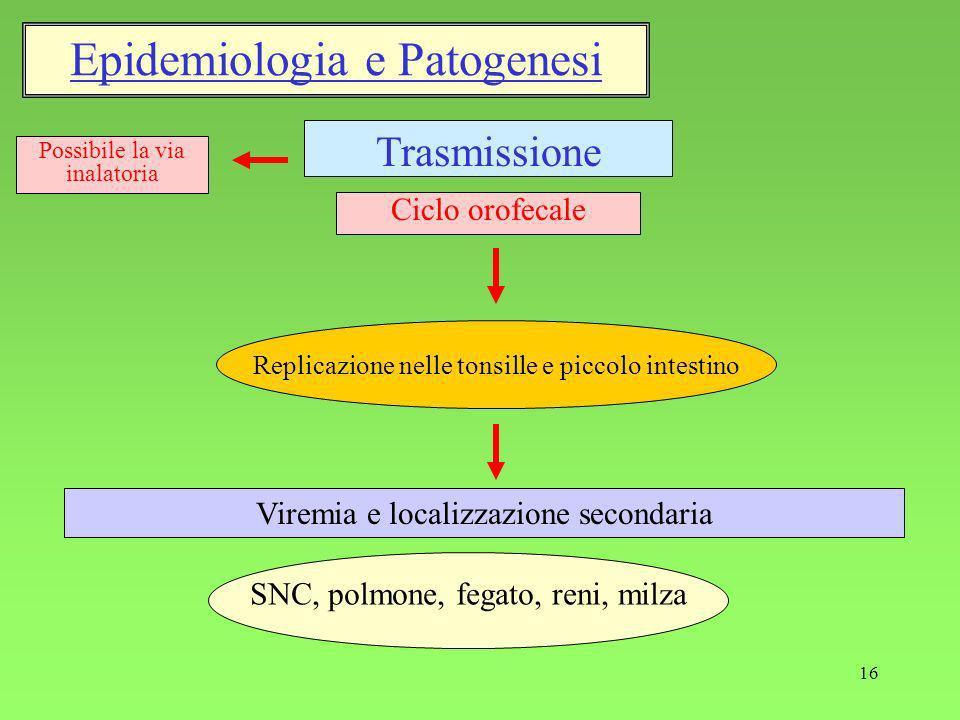 16 Trasmissione Viremia e localizzazione secondaria Ciclo orofecale Possibile la via inalatoria Replicazione nelle tonsille e piccolo intestino Epidemiologia e Patogenesi SNC, polmone, fegato, reni, milza