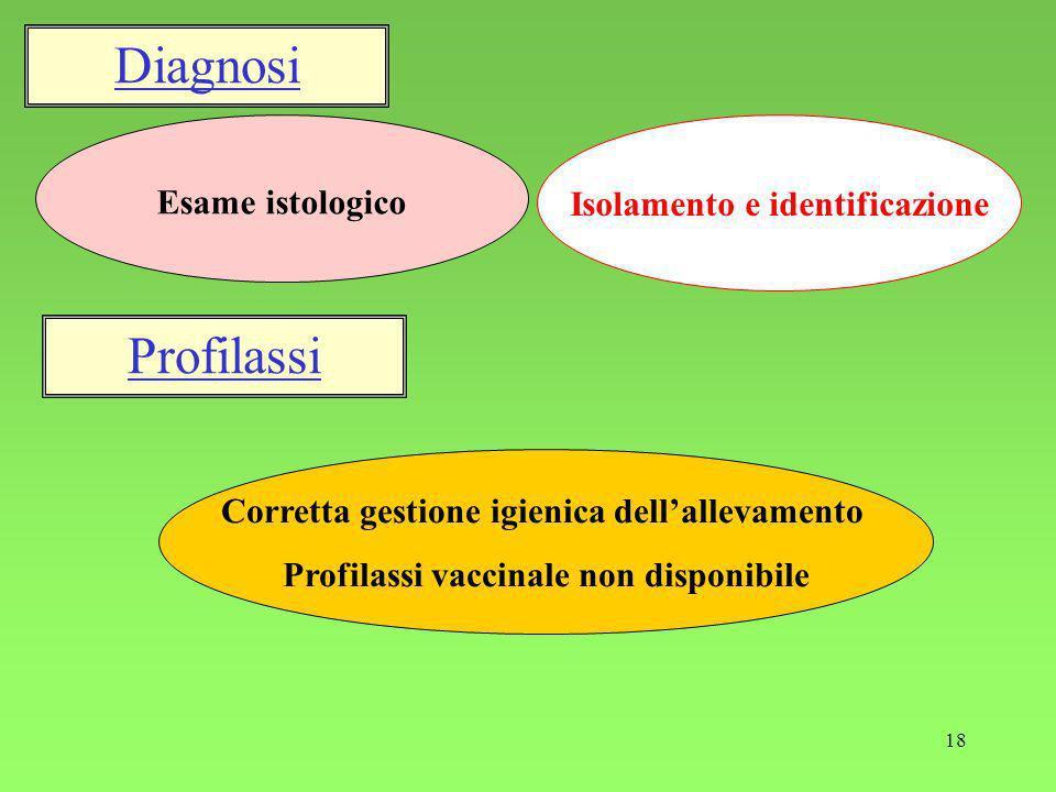 18 Isolamento e identificazione Esame istologico Corretta gestione igienica dellallevamento Profilassi vaccinale non disponibile Diagnosi Profilassi