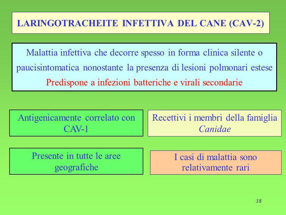 38 LARINGOTRACHEITE INFETTIVA DEL CANE (CAV-2) Recettivi i membri della famiglia Canidae Malattia infettiva che decorre spesso in forma clinica silente o paucisintomatica nonostante la presenza di lesioni polmonari estese Predispone a infezioni batteriche e virali secondarie Antigenicamente correlato con CAV-1 Presente in tutte le aree geografiche I casi di malattia sono relativamente rari