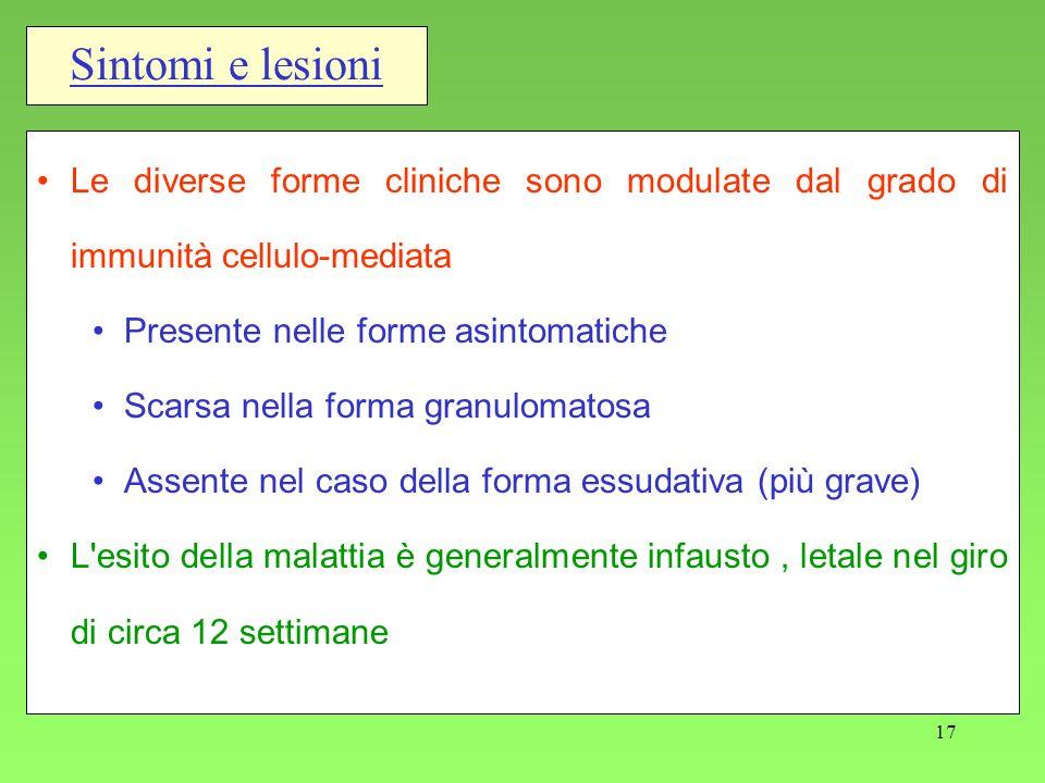 17 Sintomi e lesioni Le diverse forme cliniche sono modulate dal grado di immunità cellulo-mediata Presente nelle forme asintomatiche Scarsa nella for
