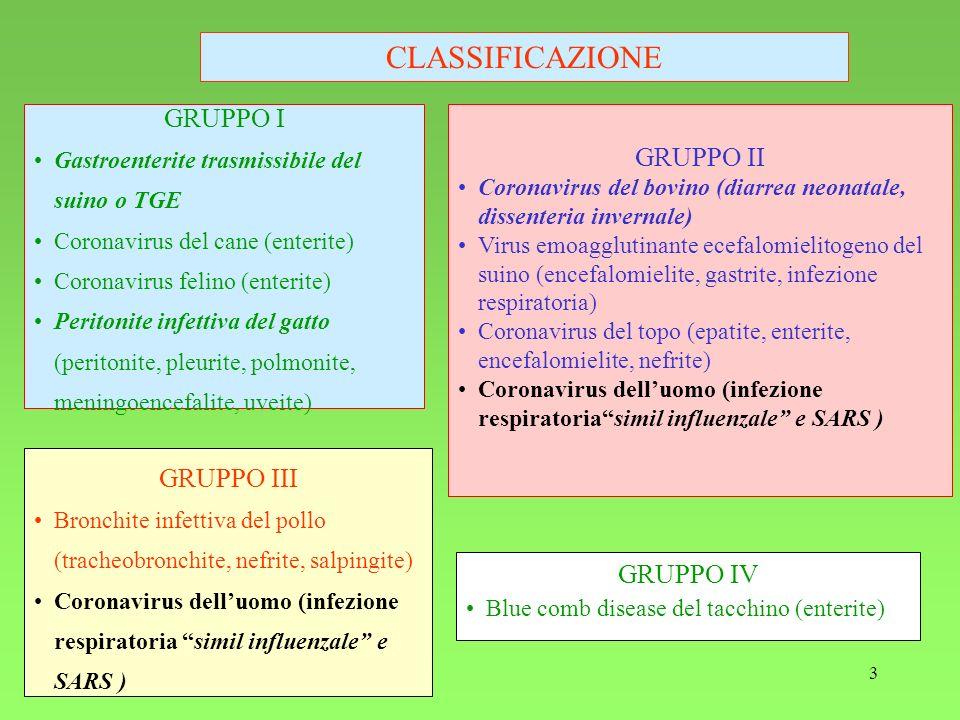 3 CLASSIFICAZIONE GRUPPO I Gastroenterite trasmissibile del suino o TGE Coronavirus del cane (enterite) Coronavirus felino (enterite) Peritonite infet