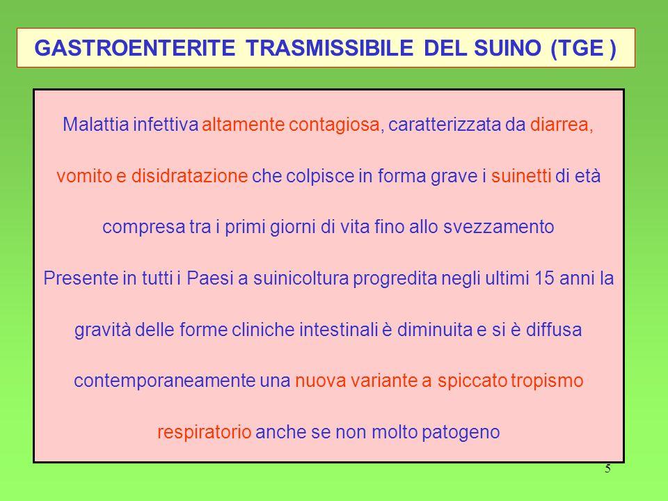 5 GASTROENTERITE TRASMISSIBILE DEL SUINO (TGE ) Malattia infettiva altamente contagiosa, caratterizzata da diarrea, vomito e disidratazione che colpis