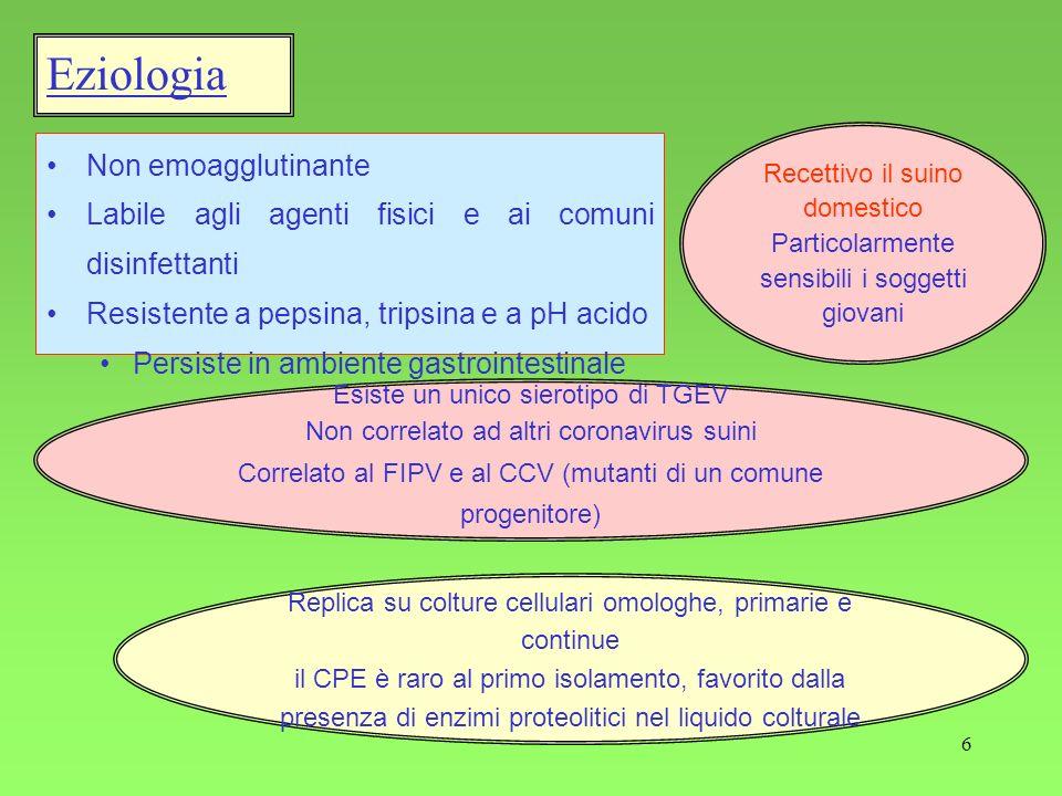 6 Eziologia Non emoagglutinante Labile agli agenti fisici e ai comuni disinfettanti Resistente a pepsina, tripsina e a pH acido Persiste in ambiente g