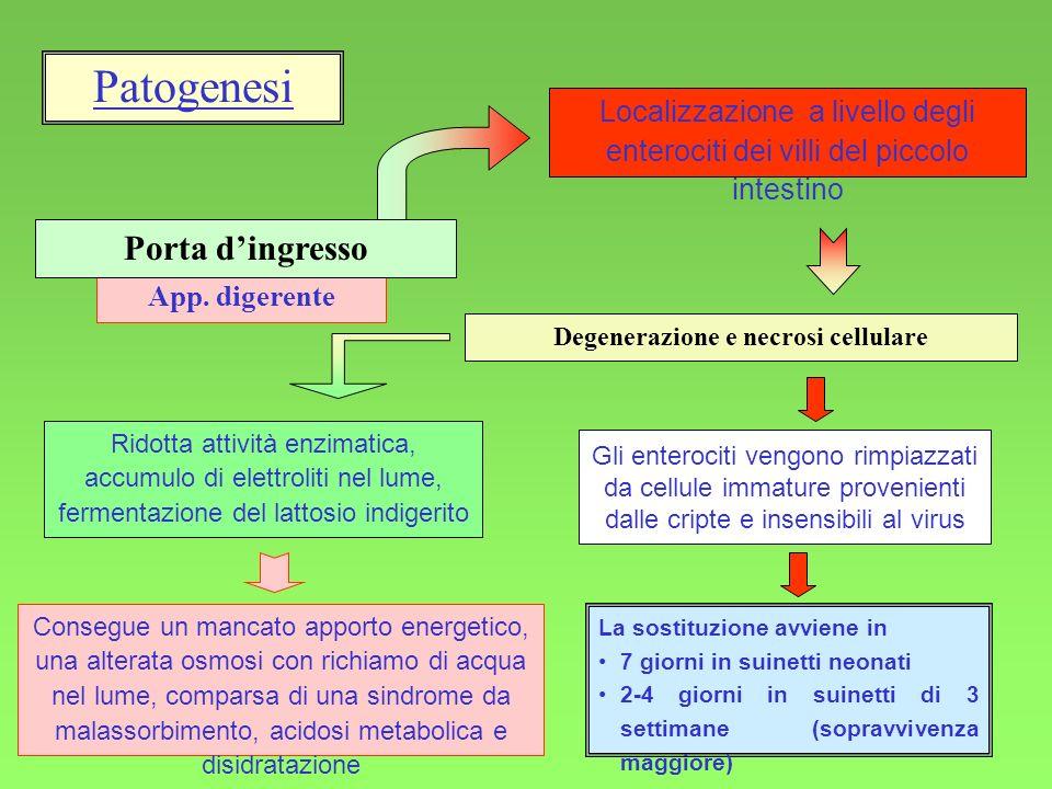 20 Peritonite fibrinosa acuta diffusa