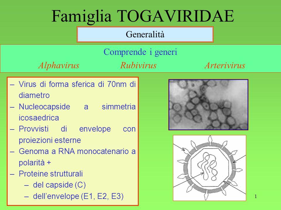 1 Famiglia TOGAVIRIDAE Generalità Comprende i generi Alphavirus Rubivirus Arterivirus –Virus di forma sferica di 70nm di diametro –Nucleocapside a simmetria icosaedrica –Provvisti di envelope con proiezioni esterne –Genoma a RNA monocatenario a polarità + –Proteine strutturali –del capside (C) –dellenvelope (E1, E2, E3)