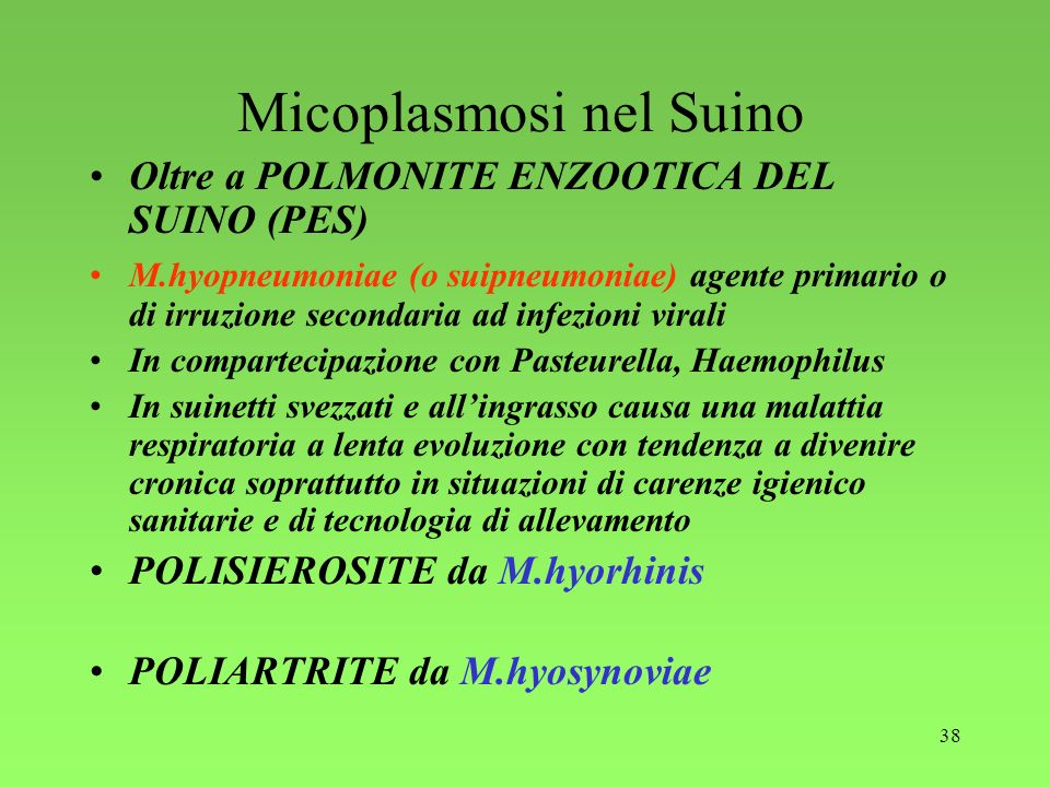 38 Micoplasmosi nel Suino Oltre a POLMONITE ENZOOTICA DEL SUINO (PES) M.hyopneumoniae (o suipneumoniae) agente primario o di irruzione secondaria ad i
