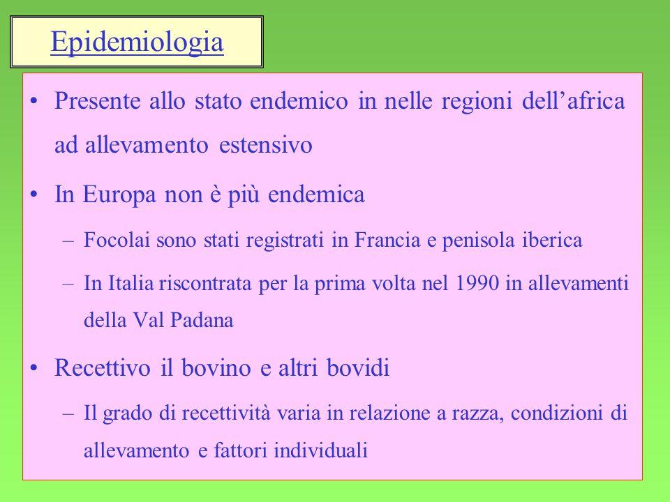 4 Presente allo stato endemico in nelle regioni dellafrica ad allevamento estensivo In Europa non è più endemica –Focolai sono stati registrati in Fra