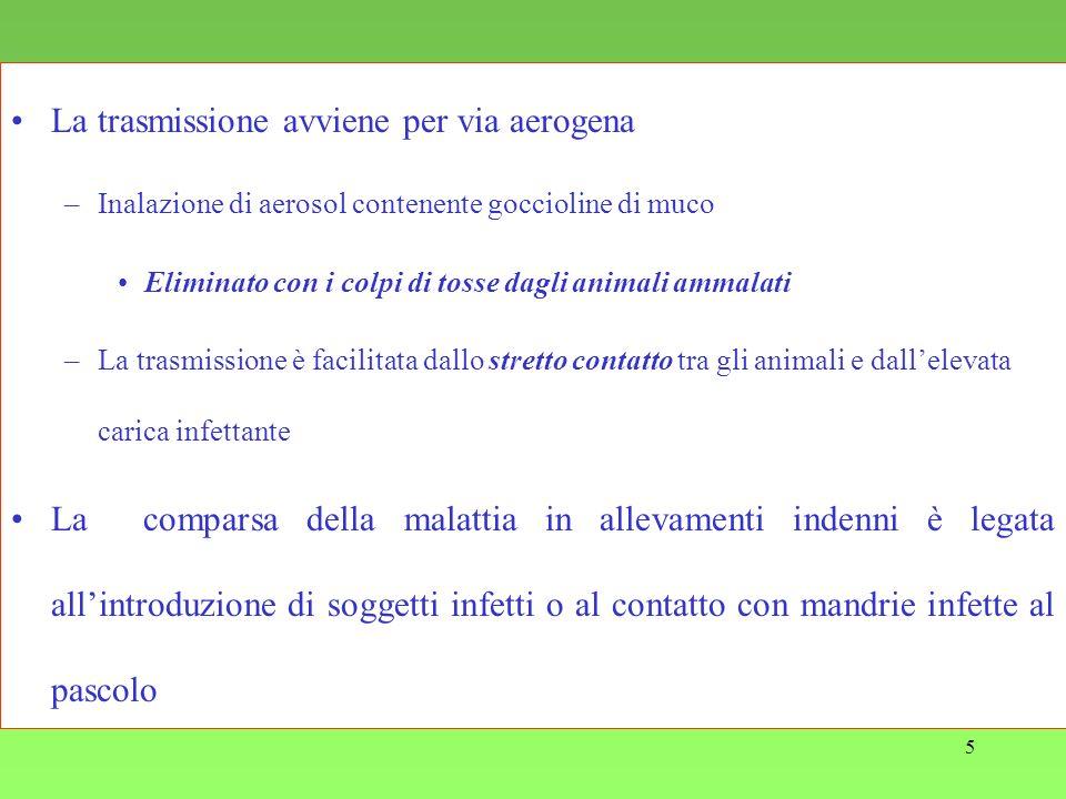 5 La trasmissione avviene per via aerogena –Inalazione di aerosol contenente goccioline di muco Eliminato con i colpi di tosse dagli animali ammalati