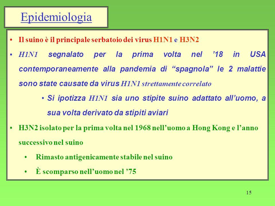 15 Epidemiologia Il suino è il principale serbatoio dei virus H1N1 e H3N2 H1N1 segnalato per la prima volta nel 18 in USA contemporaneamente alla pand