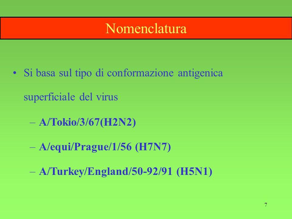 7 Nomenclatura Si basa sul tipo di conformazione antigenica superficiale del virus –A/Tokio/3/67(H2N2) –A/equi/Prague/1/56 (H7N7) –A/Turkey/England/50