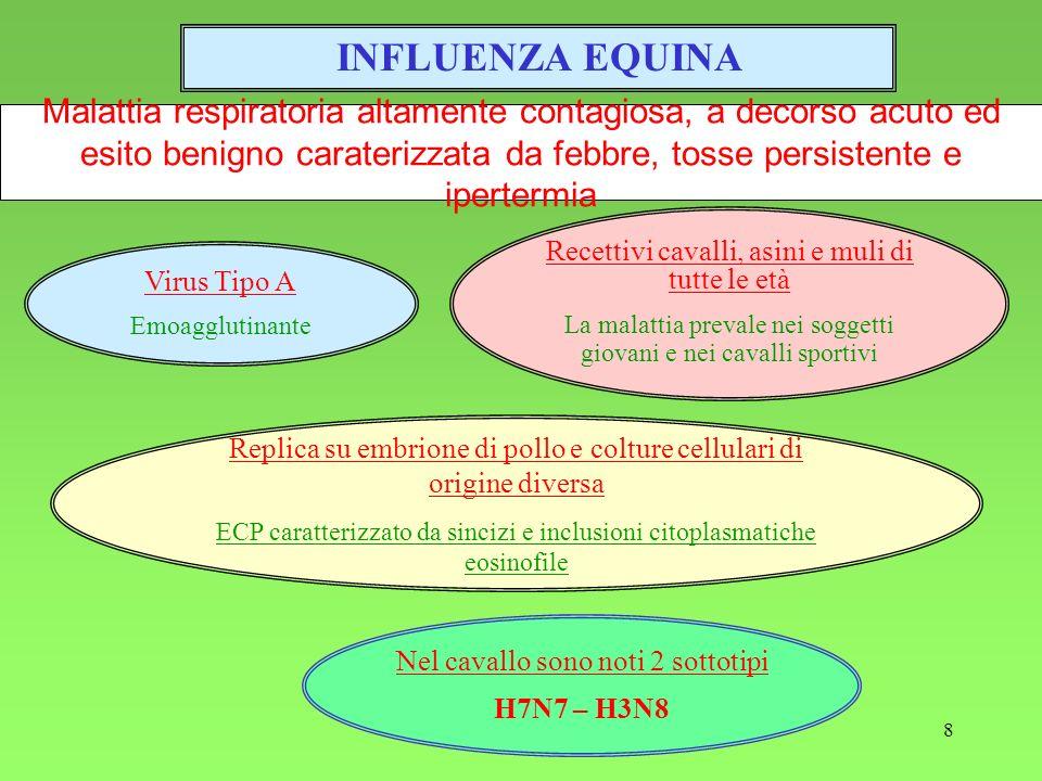 9 Epidemiologia Responsabile in passato di gravi pandemie Nel 1956 (1° isolamento) grave pandemia in Europa (H7N7) Nel 1963 (2° isolamento) grave pandemia in USA (H3N8) Malattia diffusa su scala mondiale con andamento stagionale (autunno – inverno) H3N8 rappresenta il sottotipo dominante mentre H7N7 provoca infezioni sub-cliniche e viene isolato raramente Modalità di trasmissione Trasmissione aerogena per inalazione di aerosol contaminato Possibilità di trasmissione con laccoppiamento (isolato dal seme) Trasmissione indiretta (ruolo importante svolto dagli automezzi contaminati)