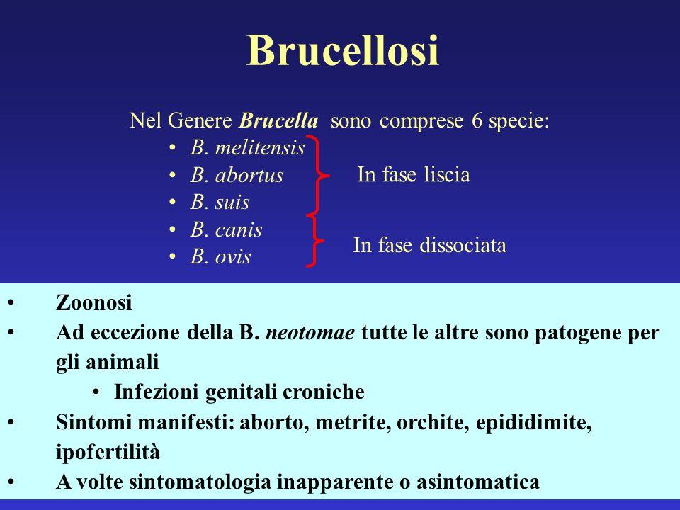 Brucellosi Nel Genere Brucella sono comprese 6 specie: B. melitensis B. abortus B. suis B. canis B. ovis In fase liscia In fase dissociata Zoonosi Ad