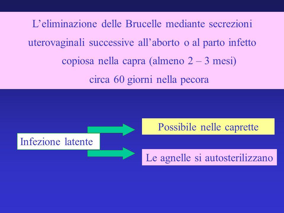 Leliminazione delle Brucelle mediante secrezioni uterovaginali successive allaborto o al parto infetto copiosa nella capra (almeno 2 – 3 mesi) circa 6