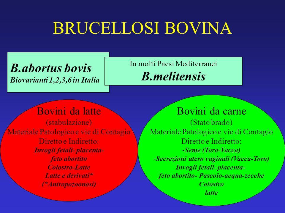 BRUCELLOSI BOVINA B.abortus bovis Biovarianti 1,2,3,6 in Italia In molti Paesi Mediterranei B.melitensis Bovini da latte (stabulazione) Materiale Pato