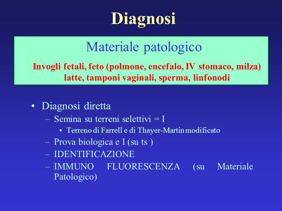 Diagnosi Diagnosi diretta –Semina su terreni selettivi = I Terreno di Farrell e di Thayer-Martin modificato –Prova biologica e I (su ts ) –IDENTIFICAZ