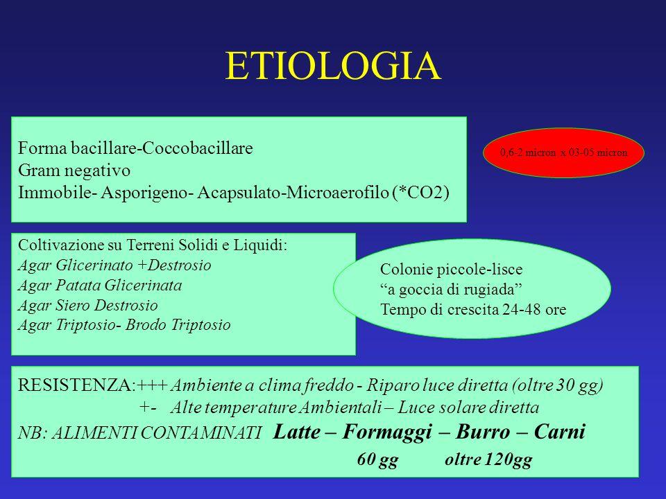 ETIOLOGIA Forma bacillare-Coccobacillare Gram negativo Immobile- Asporigeno- Acapsulato-Microaerofilo (*CO2) Coltivazione su Terreni Solidi e Liquidi: