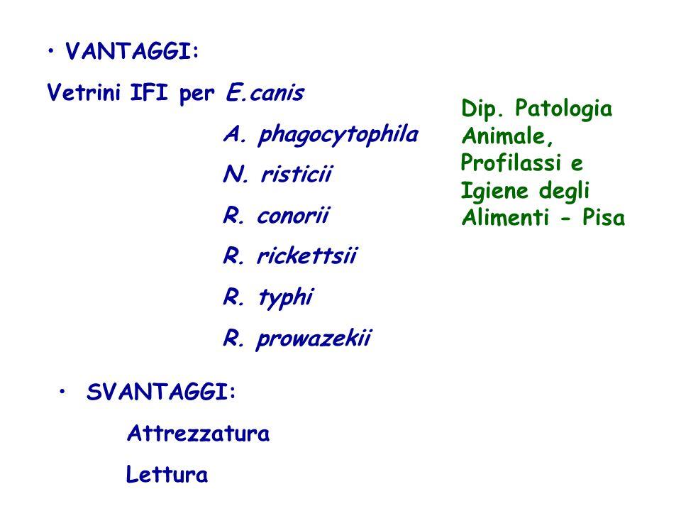 VANTAGGI: Vetrini IFI per E.canis A. phagocytophila N. risticii R. conorii R. rickettsii R. typhi R. prowazekii SVANTAGGI: Attrezzatura Lettura Dip. P