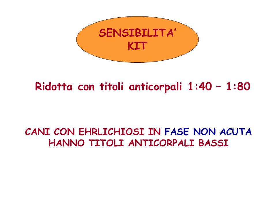 SENSIBILITA KIT Ridotta con titoli anticorpali 1:40 – 1:80 CANI CON EHRLICHIOSI IN FASE NON ACUTA HANNO TITOLI ANTICORPALI BASSI