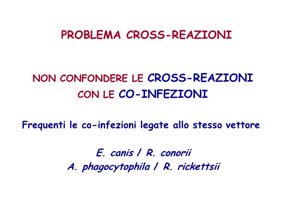 PROBLEMA CROSS-REAZIONI NON CONFONDERE LE CROSS-REAZIONI CON LE CO-INFEZIONI Frequenti le co-infezioni legate allo stesso vettore E. canis / R. conori