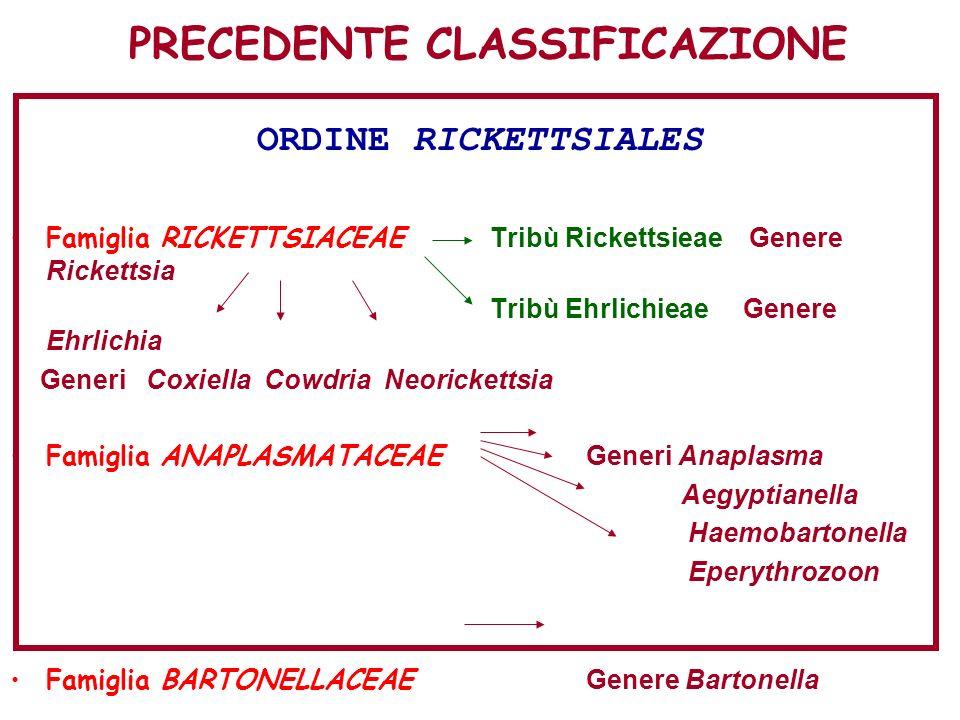 PRECEDENTE CLASSIFICAZIONE ORDINE RICKETTSIALES Famiglia RICKETTSIACEAE Tribù Rickettsieae Genere Rickettsia Tribù Ehrlichieae Genere Ehrlichia Generi