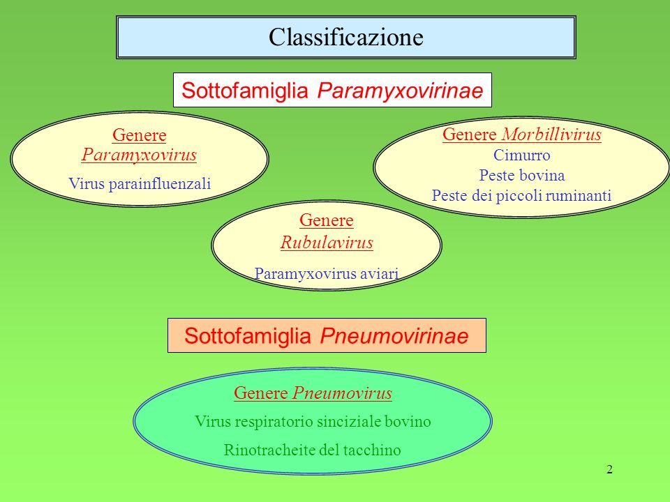 2 Genere Paramyxovirus Virus parainfluenzali Genere Rubulavirus Paramyxovirus aviari Genere Morbillivirus Cimurro Peste bovina Peste dei piccoli rumin