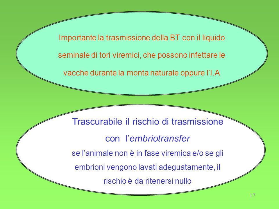17 Importante la trasmissione della BT con il liquido seminale di tori viremici, che possono infettare le vacche durante la monta naturale oppure lI.A
