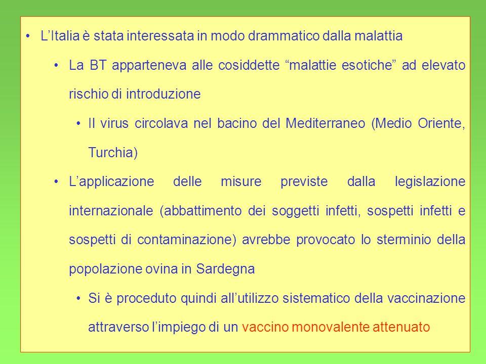 35 LItalia è stata interessata in modo drammatico dalla malattia La BT apparteneva alle cosiddette malattie esotiche ad elevato rischio di introduzion