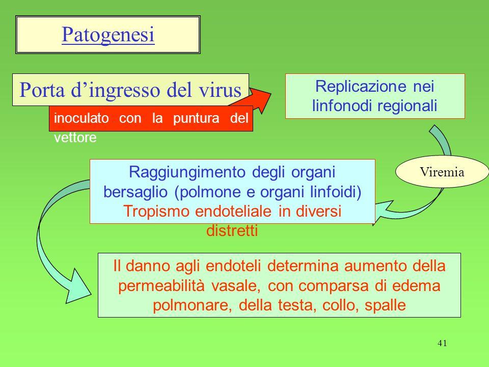 41 Porta dingresso del virus inoculato con la puntura del vettore Raggiungimento degli organi bersaglio (polmone e organi linfoidi) Tropismo endotelia