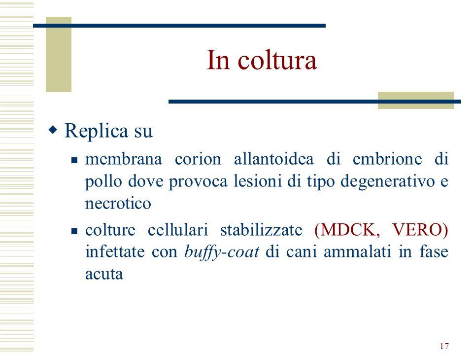 17 In coltura Replica su membrana corion allantoidea di embrione di pollo dove provoca lesioni di tipo degenerativo e necrotico colture cellulari stab
