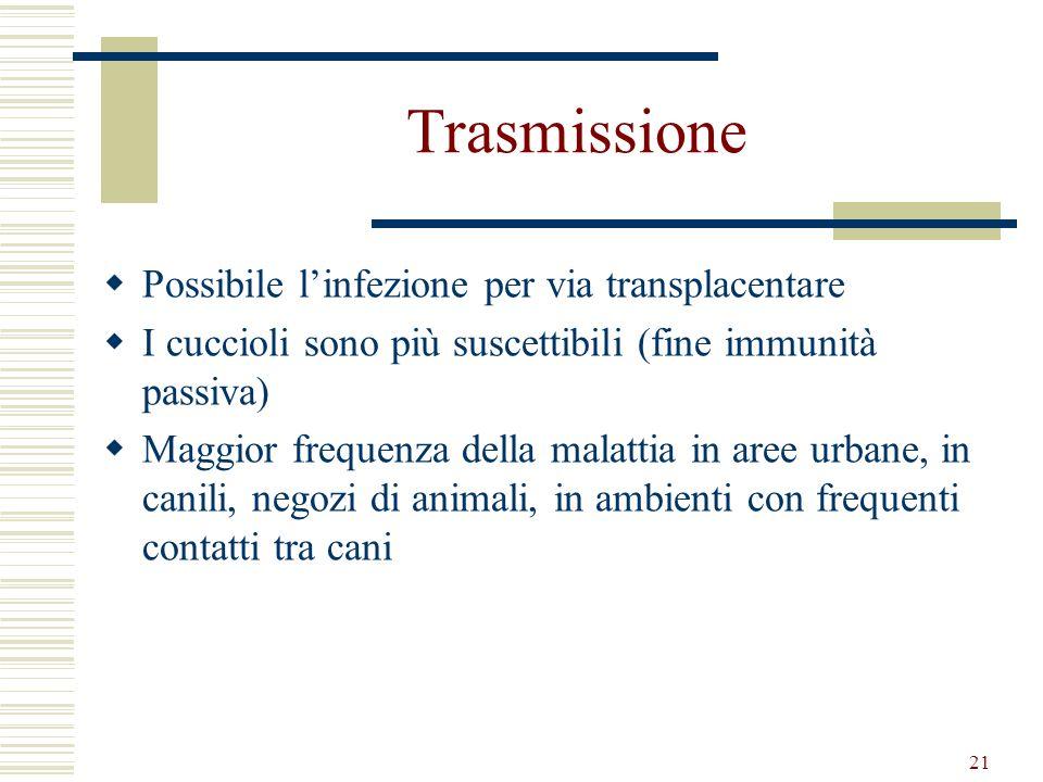 21 Trasmissione Possibile linfezione per via transplacentare I cuccioli sono più suscettibili (fine immunità passiva) Maggior frequenza della malattia