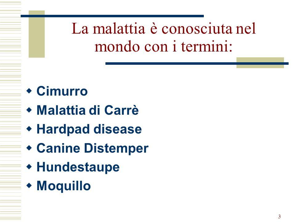 3 La malattia è conosciuta nel mondo con i termini: Cimurro Malattia di Carrè Hardpad disease Canine Distemper Hundestaupe Moquillo