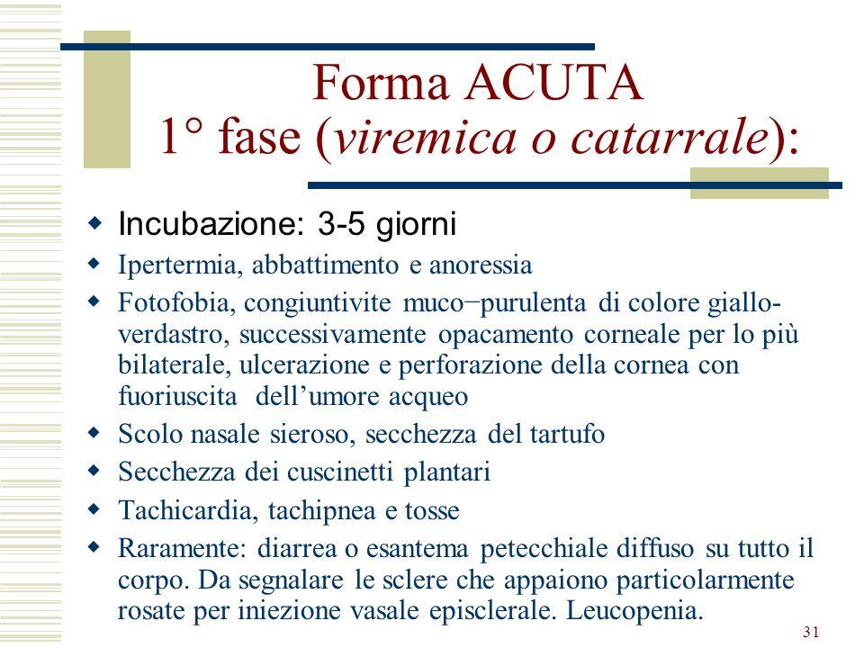 31 Forma ACUTA 1° fase (viremica o catarrale): Incubazione: 3-5 giorni Ipertermia, abbattimento e anoressia Fotofobia, congiuntivite mucopurulenta di