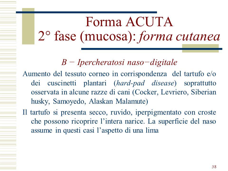 38 Forma ACUTA 2° fase (mucosa): forma cutanea B Ipercheratosi nasodigitale Aumento del tessuto corneo in corrispondenza del tartufo e/o dei cuscinett