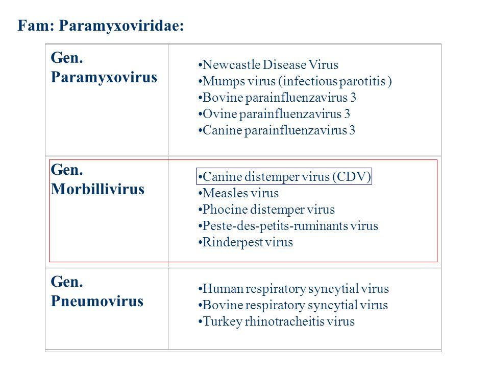 Fam: Paramyxoviridae: Gen. Paramyxovirus Newcastle Disease Virus Mumps virus (infectious parotitis ) Bovine parainfluenzavirus 3 Ovine parainfluenzavi