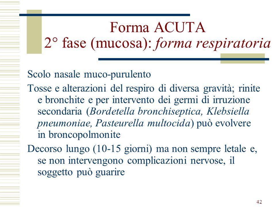 42 Forma ACUTA 2° fase (mucosa): forma respiratoria Scolo nasale muco-purulento Tosse e alterazioni del respiro di diversa gravità; rinite e bronchite