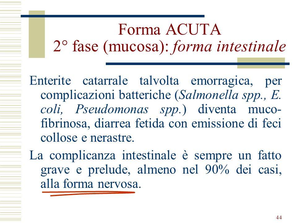 44 Forma ACUTA 2° fase (mucosa): forma intestinale Enterite catarrale talvolta emorragica, per complicazioni batteriche (Salmonella spp., E. coli, Pse