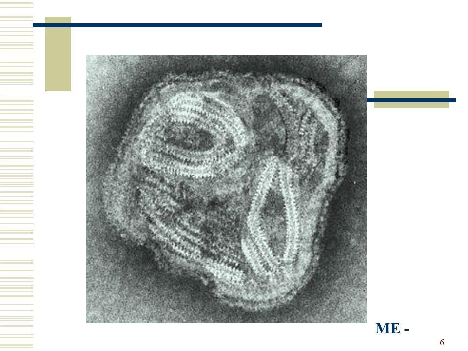 17 In coltura Replica su membrana corion allantoidea di embrione di pollo dove provoca lesioni di tipo degenerativo e necrotico colture cellulari stabilizzate (MDCK, VERO) infettate con buffy-coat di cani ammalati in fase acuta