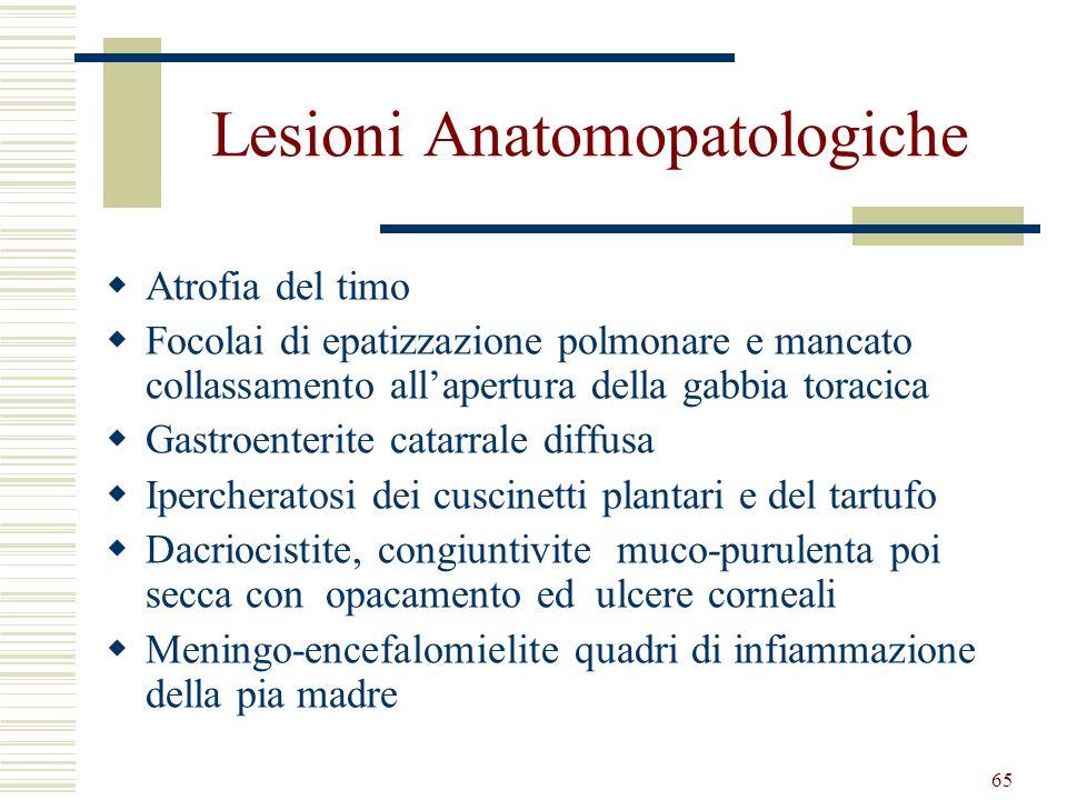 65 Lesioni Anatomopatologiche Atrofia del timo Focolai di epatizzazione polmonare e mancato collassamento allapertura della gabbia toracica Gastroente