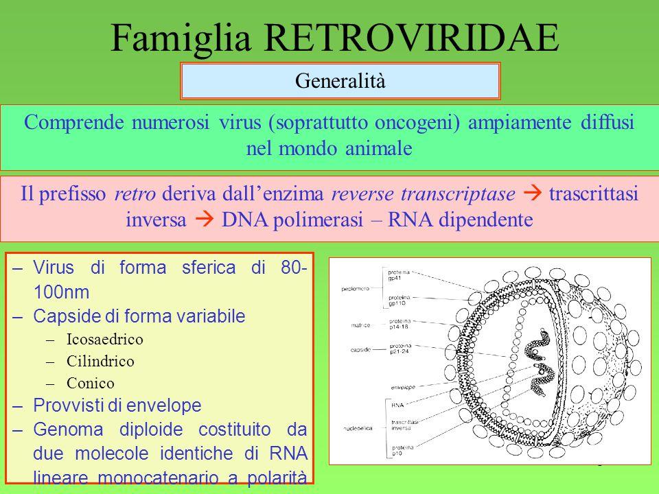 1 Famiglia RETROVIRIDAE Generalità Comprende numerosi virus (soprattutto oncogeni) ampiamente diffusi nel mondo animale Il prefisso retro deriva dalle